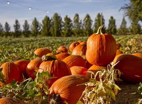 halloween-az-2016-schnepf-farms